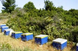 Honing van Thassos en Chalkidiki in Griekenland