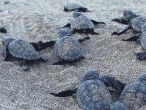 In juni naar Zakynthos op vakantie schildpadden