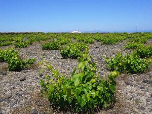 Wijn uit Santorini