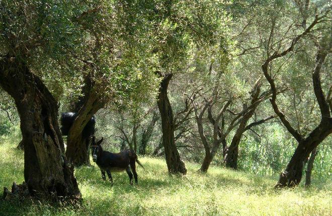 Wandelen op Corfu met lokale gids