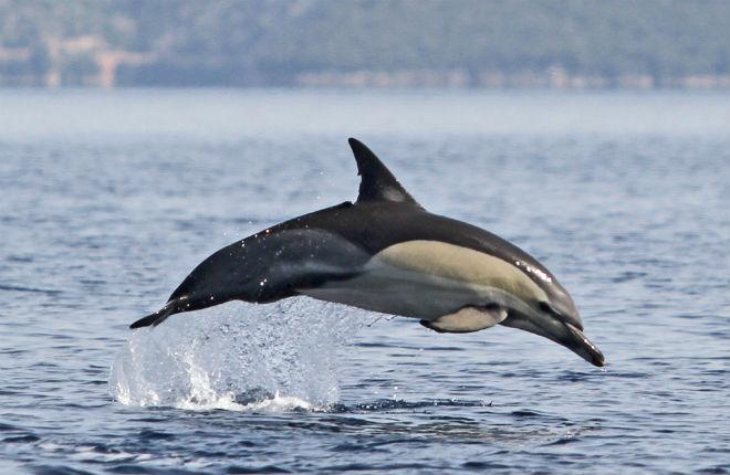 Griekenland.net adopteert dolfijn