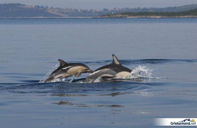 Sagapo de dolfijn