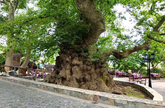 Krasi Kreta de oude plataan